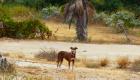 Basse-Californie du Sud - Todos Santos - Casa Rancho