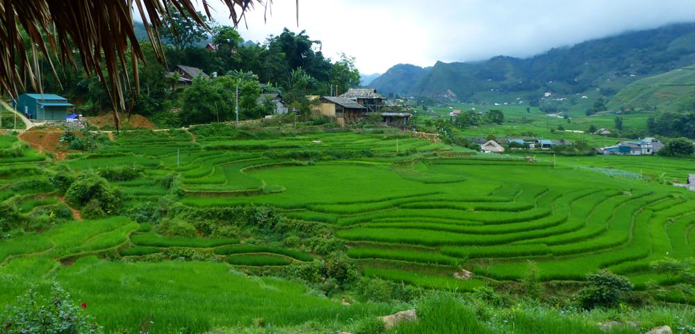 Quand partir au Vietnam - Sapa vert
